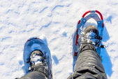 Men legs are shod with snowshoes on the snow — Stock Photo