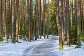 Snowy road in a mixed forest in winter — Стоковое фото