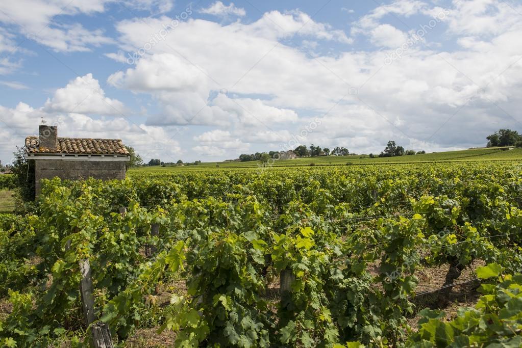 Vinyard en Saint-Emilion con casa � Foto stock � Kloeg008 #55685573