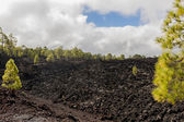 Forest on lava field and clouds — Stock Photo