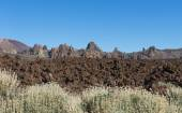 Lava Field El Teide with shrubs — Stock Photo