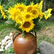 Magnificent bouquet of vivid sunflowers in antique clay pot outdoors near a rock on green grass. Clay flowerpot with bright yellow fresh sunflowers in garden. Garden arrangement with rocks and flowers — Stock Photo #53053479
