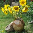 Magnificent bouquet of vivid sunflowers in antique clay pot outdoors near a rock on green grass. Clay flowerpot with bright yellow fresh sunflowers in garden. Garden arrangement with rocks and flowers — Stock Photo #53053485