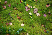 Moss with autumn forest — Stock Photo