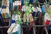 Old books in lattice window with sprouted plants — Stock Photo
