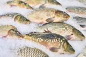 Carp fish lie on ice in supermarket store — Stock Photo
