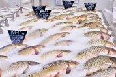 Carp fish lie on ice in supermarket store — Stock Photo