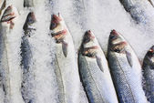 Fish on ice in supermarket store — Stock Photo