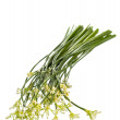 Постер, плакат: Garlic chives