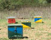 Four Bee Hives — Stock Photo