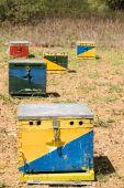 Hives — Stock Photo