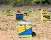 Group of Bee Hives — Stock Photo