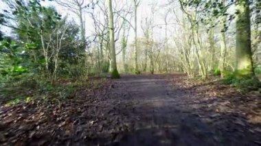 Woodland footpath — Stock Video
