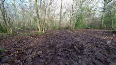 Forest footpath — Stock Video