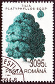 "ROMANIA - CIRCA 1994: A stamp printed in Romania from the ""Trees "" issue shows Large leaved lime, circa 1994. — Stockfoto"