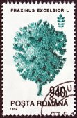 "ROMANIA - CIRCA 1994: A stamp printed in Romania from the ""Trees "" issue shows Ash , circa 1994. — Stockfoto"
