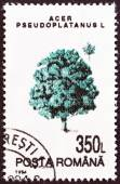 "ROMANIA - CIRCA 1994: A stamp printed in Romania from the ""Trees "" issue shows Sycamore, circa 1994. — Stock Photo"