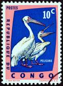 """DEMOCRATIC REPUBLIC OF CONGO - CIRCA 1963: A stamp printed in Congo from the """"Protected Birds """" issue shows Great white pelicans (Pelecanus onocrotalus), circa 1963. — Stock Photo"""