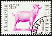 "BULGARIA - CIRCA 1992: A stamp printed in Bulgaria from the ""Farm Animals "" issue shows Billy goat (Capra aegagrus hircus), circa 1992. — Stock Photo"
