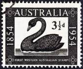 "AUSTRALIA - CIRCA 1954: A stamp printed in Australia from the ""Centenary of Western Australian Stamps "" issue shows Mute Swan, circa 1954. — Stock Photo"