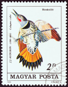 "HUNGARY - CIRCA 1985: A stamp printed in Hungary from the ""Birth Bicentenary of ornithologist John J. Audubon "" issue shows Common Flicker (Colaptes cafer), circa 1985. — Stockfoto"