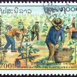 "LAOS - CIRCA 1991: A stamp printed in Laos from the ""National Tree Planting Day "" issue shows planting saplings, circa 1991. — Stock Photo #56688247"