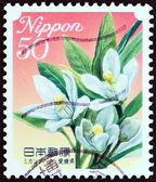 "JAPAN - CIRCA 2011: A stamp printed in Japan from the ""Flowers "" issue shows Satsuma Mandarin (Ehime Prefecture), circa 2011. — Stock Photo"