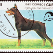 "CUBA - CIRCA 1992: A stamp printed in Cuba from the ""Dogs "" issue shows Dobermann, circa 1992. — Stock Photo #57503315"