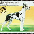 "CUBA - CIRCA 1992: A stamp printed in Cuba from the ""Dogs "" issue shows Great dane, circa 1992. — Stock Photo #57503339"