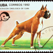 "CUBA - CIRCA 1992: A stamp printed in Cuba from the ""Dogs "" issue shows Boxer, circa 1992. — Stock Photo #57503347"