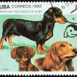 "CUBA - CIRCA 1992: A stamp printed in Cuba from the ""Dogs "" issue shows short-haired, long-haired and wire-haired dachshunds, circa 1992. — Stock Photo #57503369"