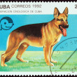 "CUBA - CIRCA 1992: A stamp printed in Cuba from the ""Dogs "" issue shows German shepherd, circa 1992. — Stock Photo #57503389"