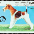 "CUBA - CIRCA 1992: A stamp printed in Cuba from the ""Dogs "" issue shows Fox terrier, circa 1992. — Stock Photo #57503405"
