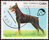 """CUBA - CIRCA 1992: A stamp printed in Cuba from the """"Dogs """" issue shows Dobermann, circa 1992. — Stock Photo"""