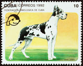 """CUBA - CIRCA 1992: A stamp printed in Cuba from the """"Dogs """" issue shows Great dane, circa 1992. — Stock Photo"""
