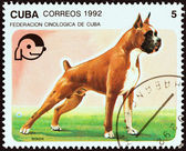 """CUBA - CIRCA 1992: A stamp printed in Cuba from the """"Dogs """" issue shows Boxer, circa 1992. — Stock Photo"""