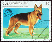 """CUBA - CIRCA 1992: A stamp printed in Cuba from the """"Dogs """" issue shows German shepherd, circa 1992. — Stock Photo"""