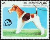 """CUBA - CIRCA 1992: A stamp printed in Cuba from the """"Dogs """" issue shows Fox terrier, circa 1992. — ストック写真"""