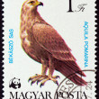 "HUNGARY - CIRCA 1983: A stamp printed in Hungary from the ""World Wildlife Fund - Birds of Prey "" issue shows Lesser spotted eagle (Aquila pomarina), circa 1983. — Stock Photo #59411933"