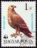 "HUNGARY - CIRCA 1983: A stamp printed in Hungary from the ""World Wildlife Fund - Birds of Prey "" issue shows Lesser spotted eagle (Aquila pomarina), circa 1983. — Stock Photo"