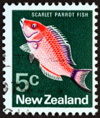 NEW ZEALAND - CIRCA 1970: A stamp printed in New Zealand shows Scarlet parrot fish (Pseudolabrus miles), circa 1970. — Stock fotografie