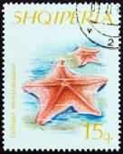 """ALBANIA - CIRCA 1966: A stamp printed in Albania from the """"Echinoderms """" issue shows Goosefoot Starfish (Palmipes membranaceus), circa 1966. — Stock Photo"""