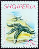 "ALBANIA - CIRCA 1966: A stamp printed in Albania from the ""Echinoderms "" issue shows Warts Starfish (Asterias glacialis), circa 1966. — Fotografia Stock"