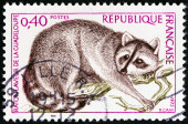 "FRANCE - CIRCA 1973: A stamp printed in France from the ""Nature Conservation "" issue shows Guadeloupe Raccoon (Procyon lotor minor), circa 1973. — Stock Photo"