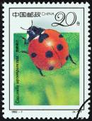 "CHINA - CIRCA 1992: A stamp printed in China from the ""19th International Entomology Congress, Beijing - Insects "" issue shows Seven-spotted ladybug (Coccinella septempunctata), circa 1992. — Stock Photo"