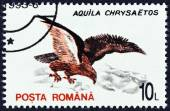 "ROMANIA - CIRCA 1993: A stamp printed in Romania from the ""Birds "" issue shows Golden eagle (Aquila chrysaetos), circa 1993. — Stock Photo"