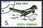 "ROMANIA - CIRCA 1993: A stamp printed in Romania from the ""Birds "" issue shows  Eurasian magpie (Pica pica), circa 1993. — Stock Photo"