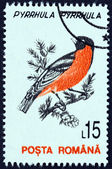 "ROMANIA - CIRCA 1993: A stamp printed in Romania from the ""Birds "" issue shows Eurasian bullfinch (Pyrrhula pyrrhula), circa 1993. — Stock Photo"