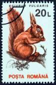 "ROMANIA - CIRCA 1993: A stamp printed in Romania from the ""Animals "" issue shows Eurasian red squirrel (Sciurus vulgaris) , circa 1993. — Stock Photo"