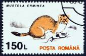 "ROMANIA - CIRCA 1993: A stamp printed in Romania from the ""Animals "" issue shows Stoat (Mustela erminea), circa 1993. — Stock Photo"